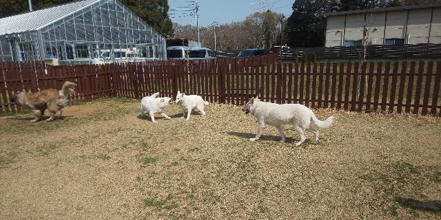 f:id:doggyparkbellhouse:20200322142205j:image