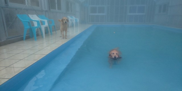 f:id:doggyparkbellhouse:20200329131946j:image
