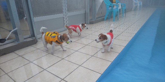 f:id:doggyparkbellhouse:20200329132400j:image