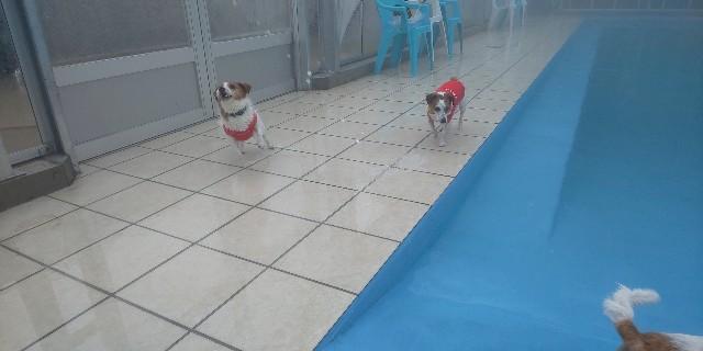 f:id:doggyparkbellhouse:20200329132423j:image