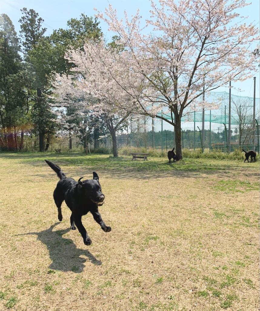 f:id:doggyparkbellhouse:20200404224638j:image