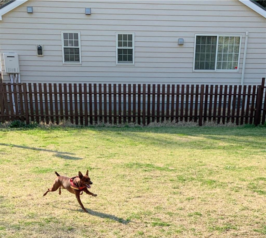 f:id:doggyparkbellhouse:20200404225454j:image