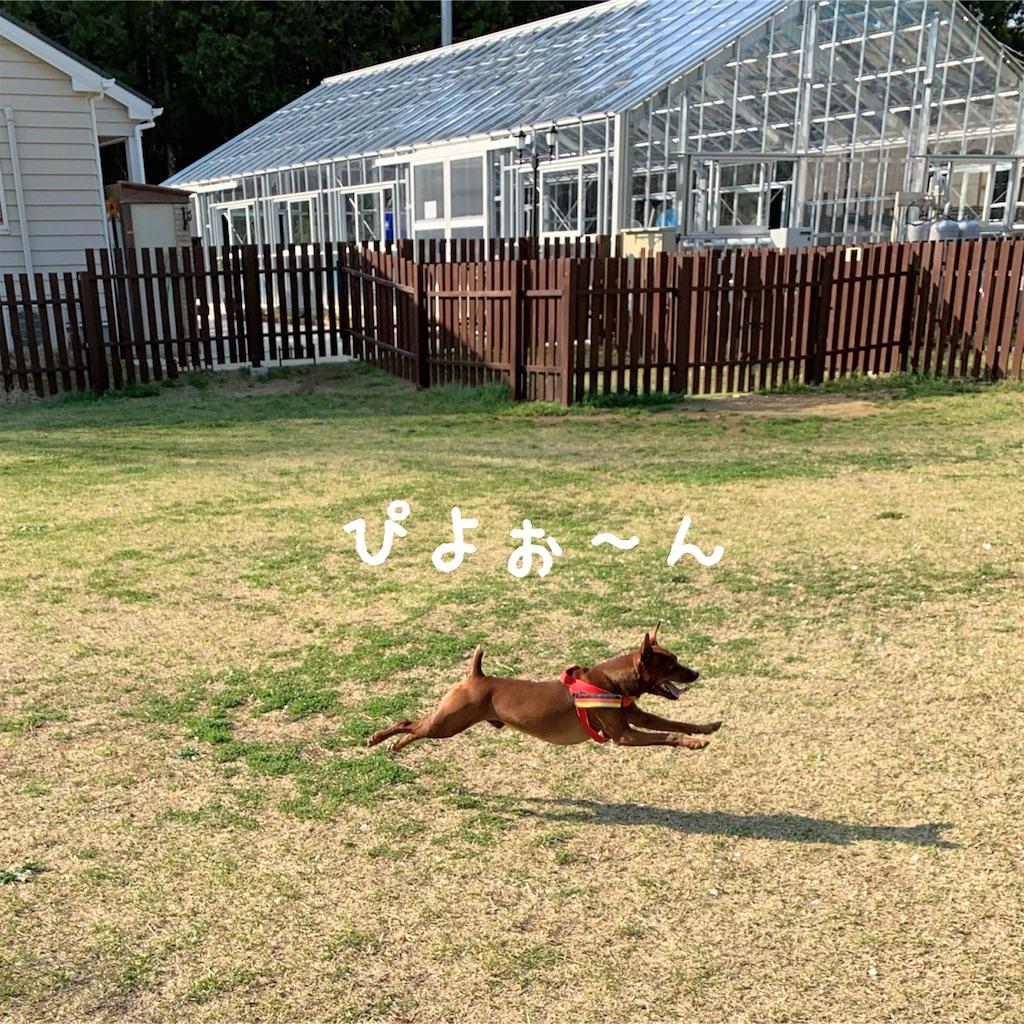 f:id:doggyparkbellhouse:20200404232228j:image