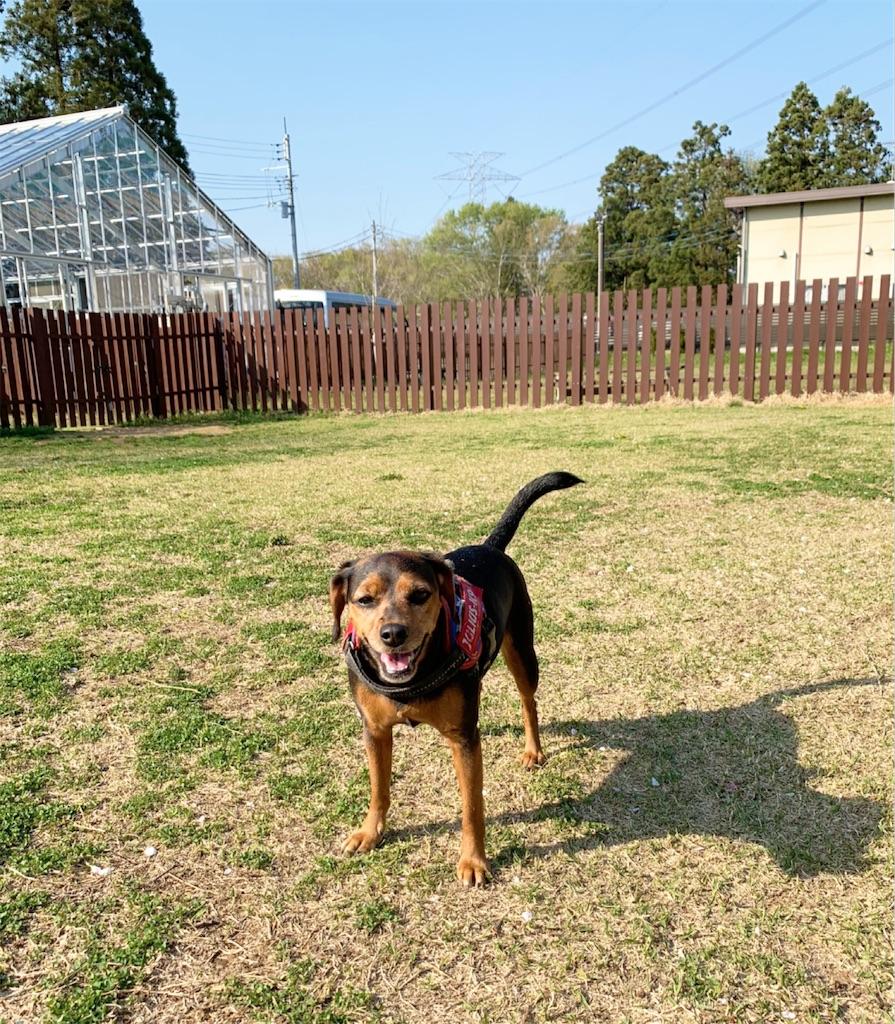 f:id:doggyparkbellhouse:20200404233629j:image