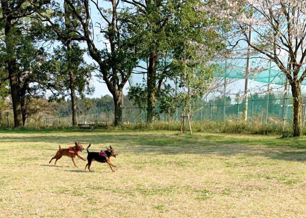f:id:doggyparkbellhouse:20200405000002j:image