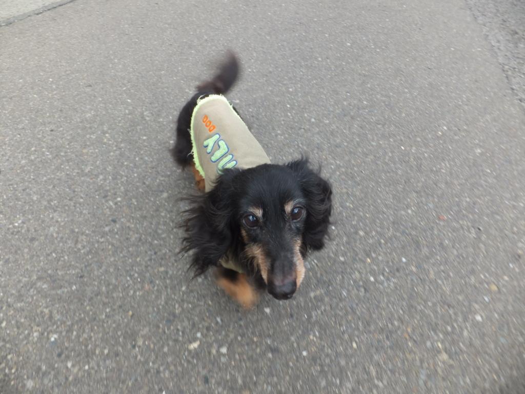 f:id:dogpalette40:20170410180713j:plain