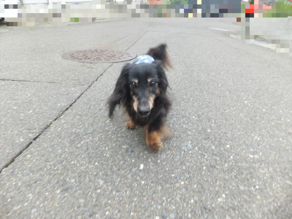 f:id:dogpalette40:20170604191137j:plain