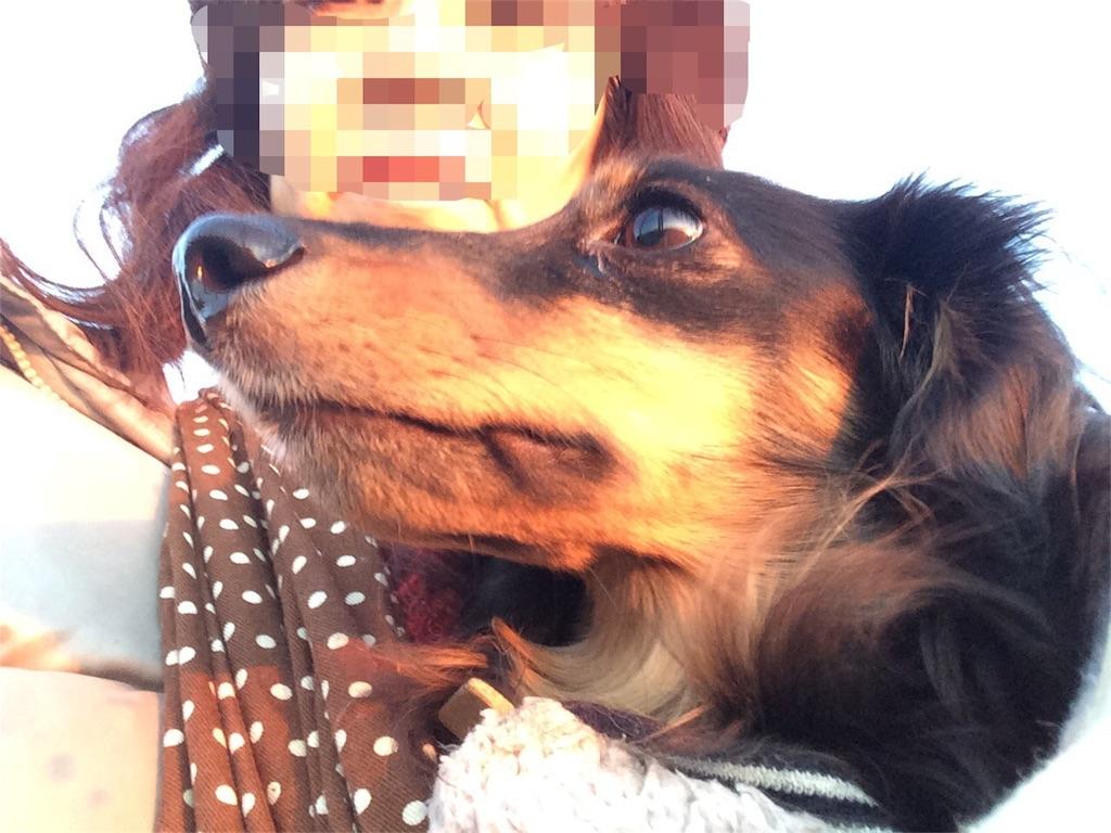 f:id:dogpalette40:20180101185804j:image