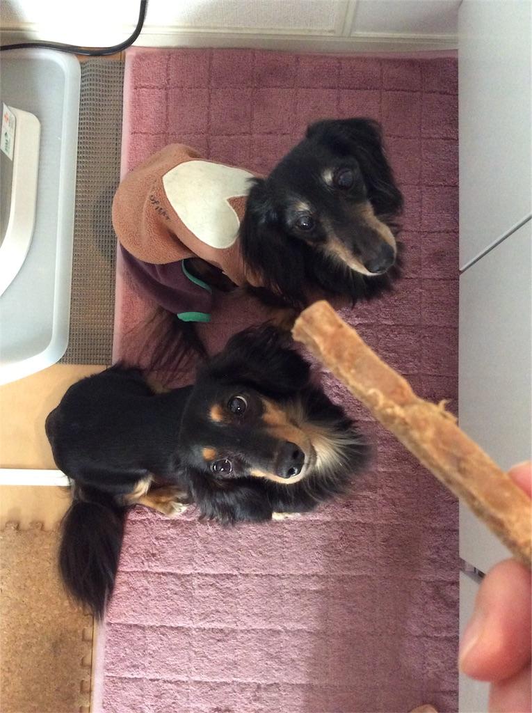 f:id:dogpalette40:20180120184045j:plain