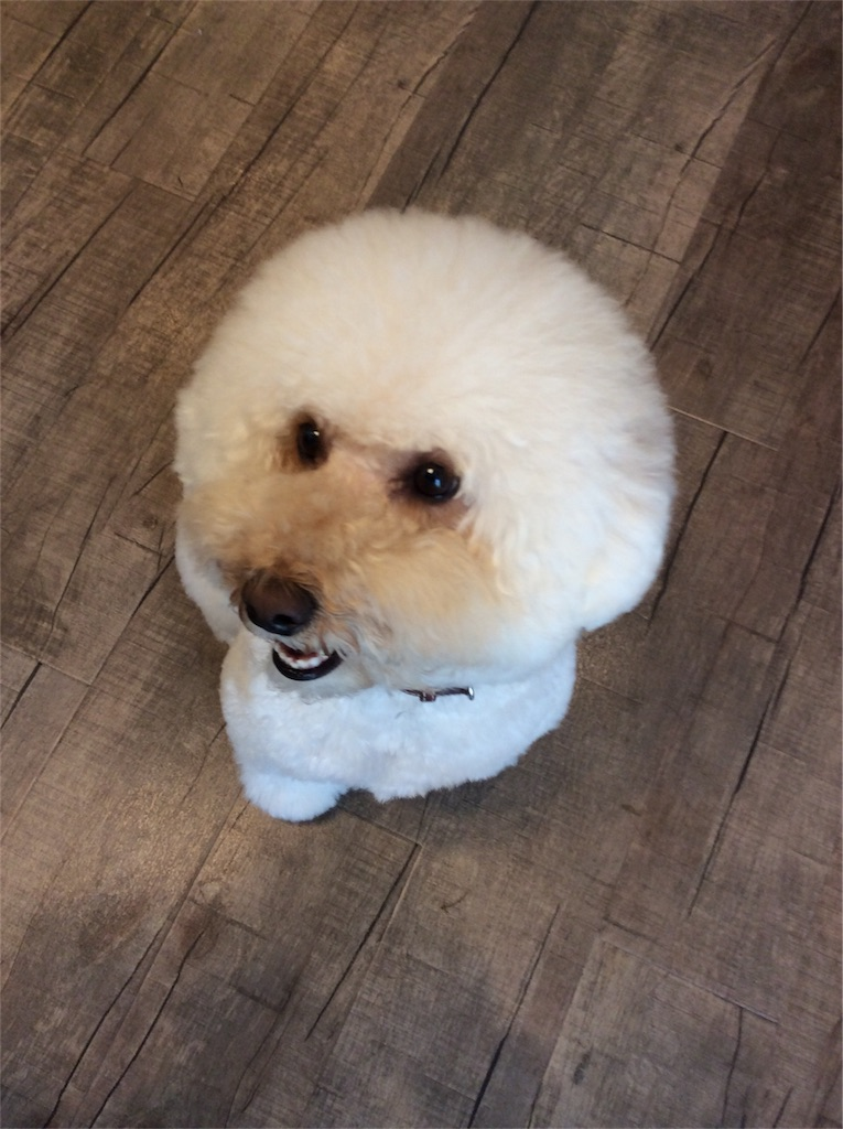 f:id:dogpalette40:20180129185333j:plain