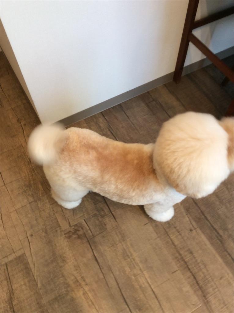 f:id:dogpalette40:20180129185440j:plain
