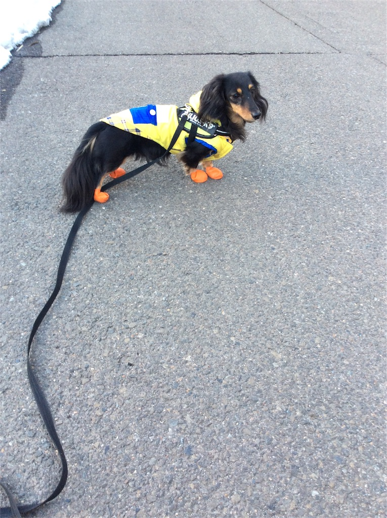 f:id:dogpalette40:20180130184401j:image