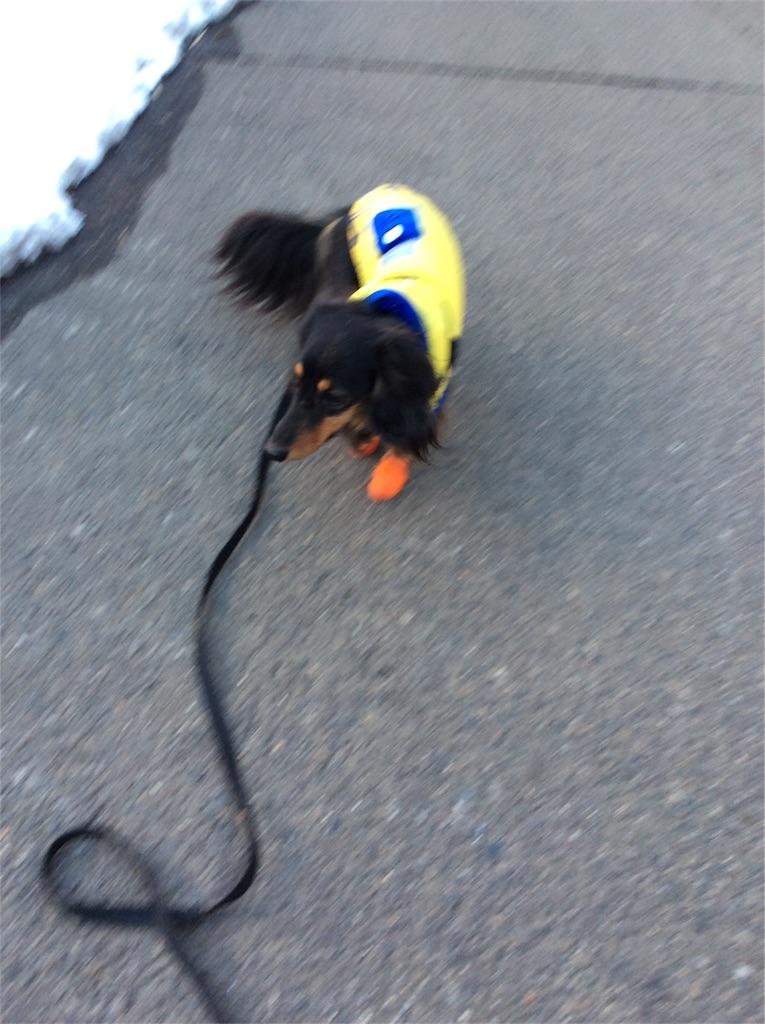 f:id:dogpalette40:20180130184412j:image