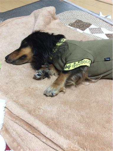 f:id:dogpalette40:20180309184951j:image