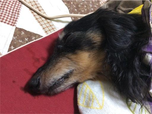 f:id:dogpalette40:20180319190356j:image
