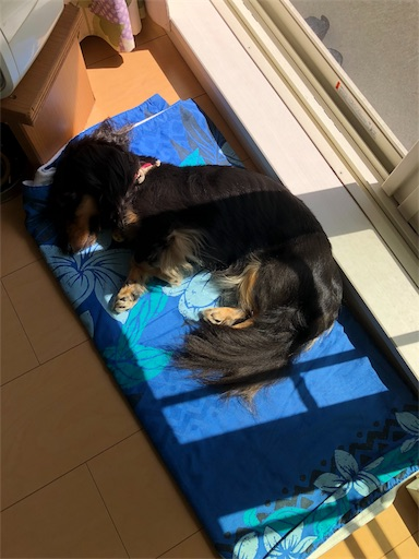 f:id:dogpalette40:20180928175913j:image