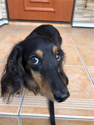 f:id:dogpalette40:20181012155529j:image