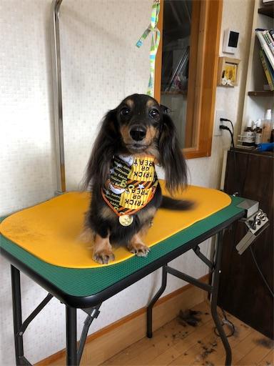 f:id:dogpalette40:20181105221506j:image