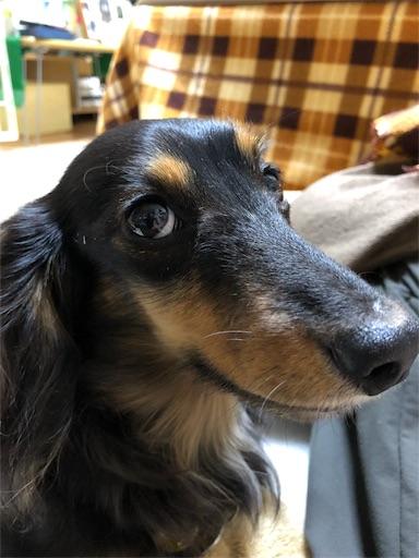 f:id:dogpalette40:20181109140103j:image