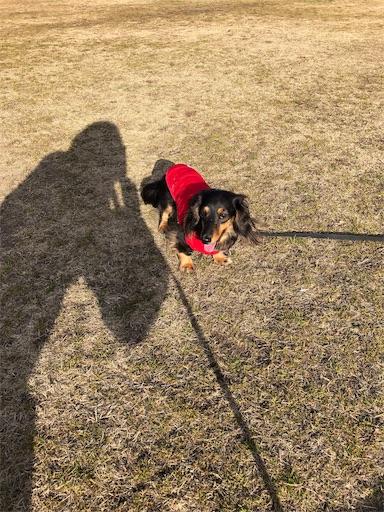 f:id:dogpalette40:20190111135316j:image