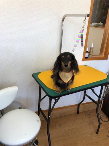 f:id:dogpalette40:20190131191806j:image