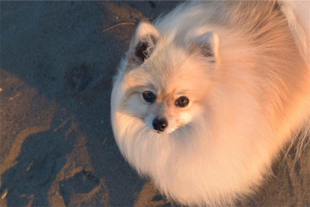 f:id:dogphoto:20170212225307j:image