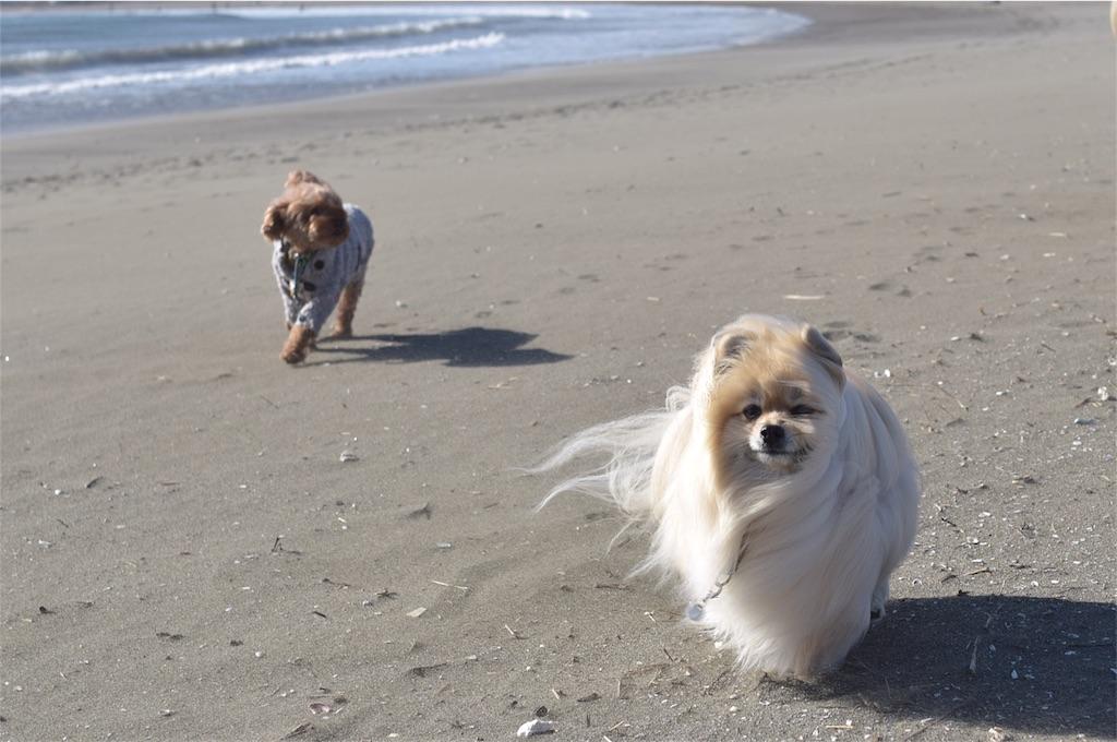 f:id:dogphoto:20170212230240j:image