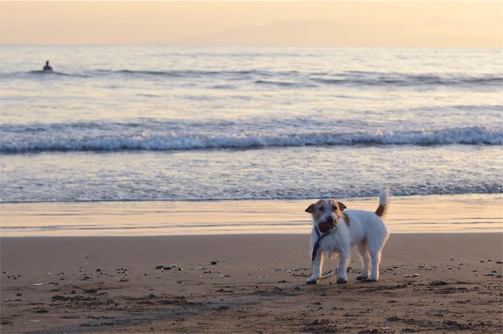 f:id:dogphoto:20170218184355j:image