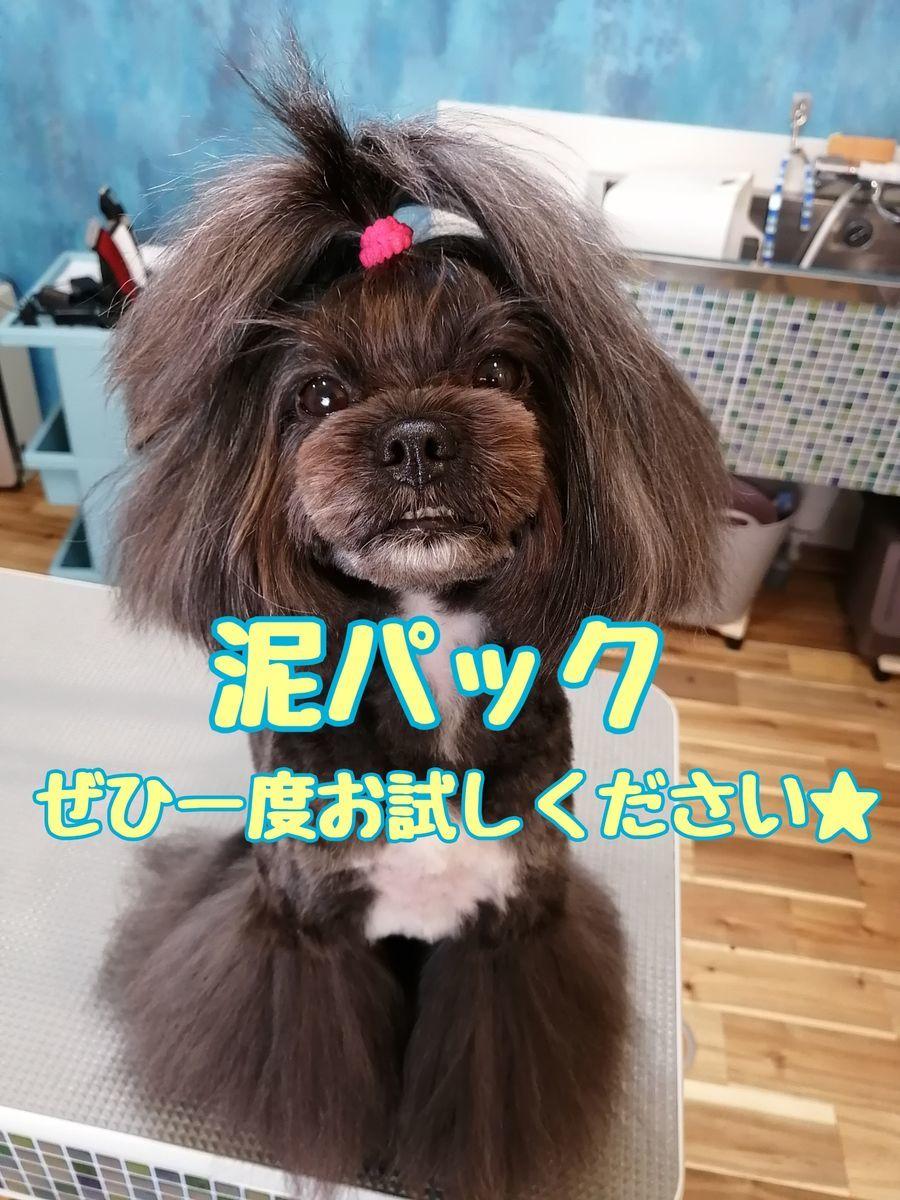 f:id:dogsalon-oluolu:20210108193521j:plain