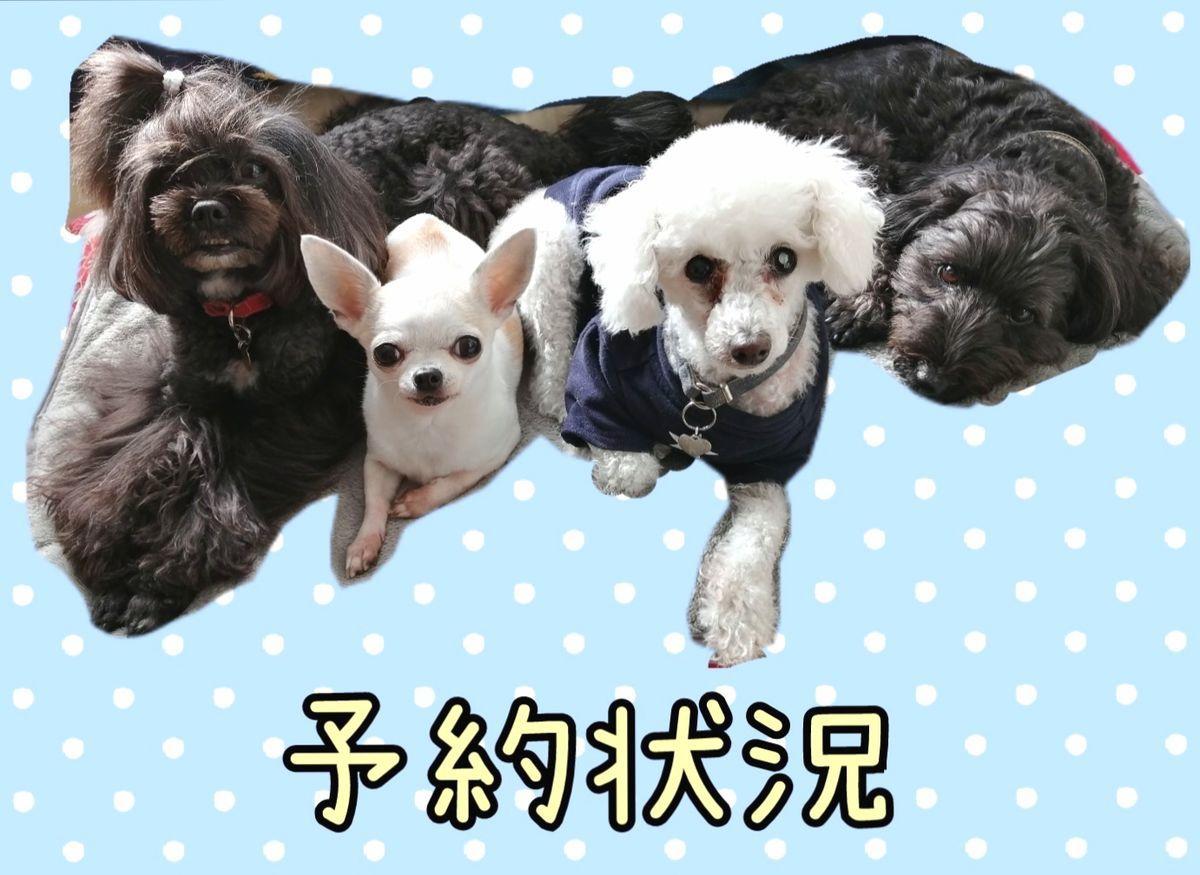f:id:dogsalon-oluolu:20210127160908j:plain