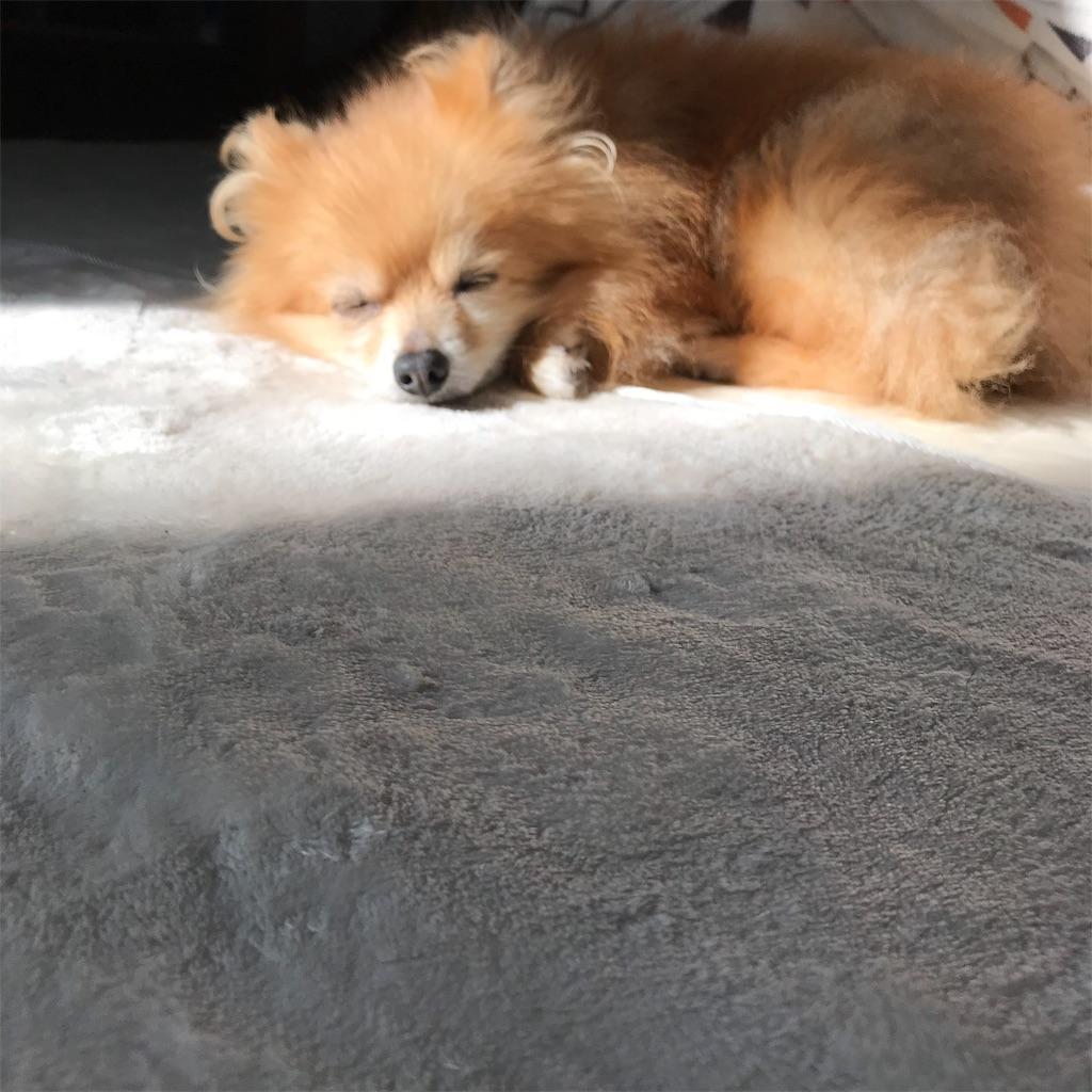 f:id:dogsss:20191030204916j:image
