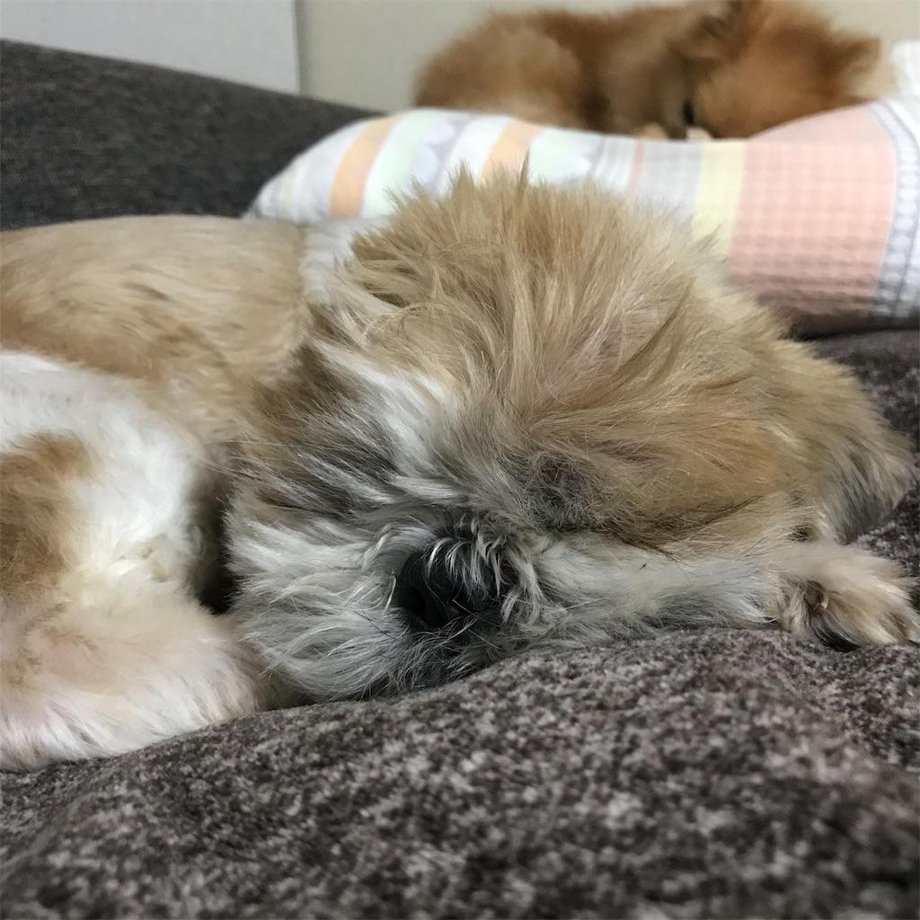 f:id:dogsss:20191101233049j:image