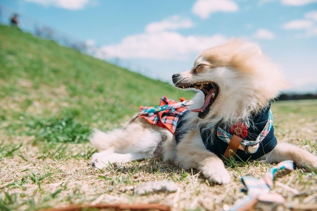 犬 うんこ たべる