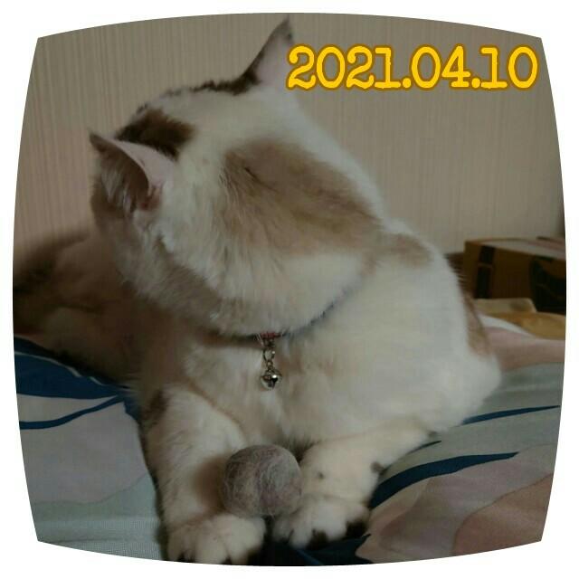 f:id:dohkeshi:20210410214817j:image