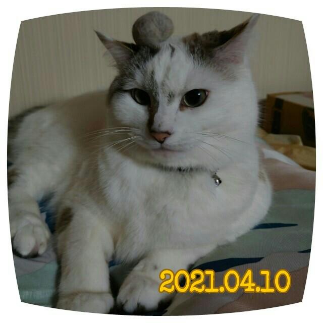 f:id:dohkeshi:20210410215358j:image