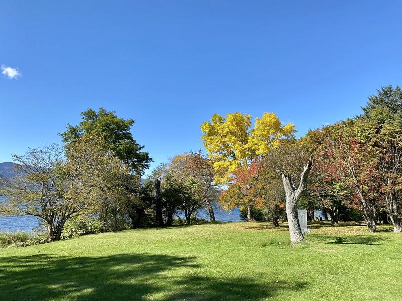 屈斜路湖畔の木々