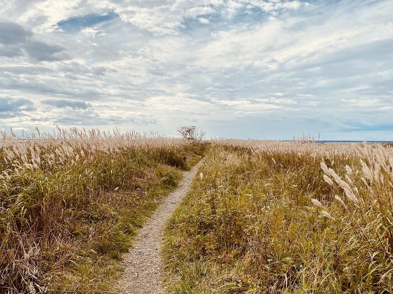 野付半島トドワラに向かう一本道