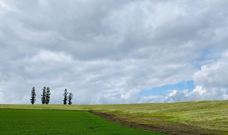 美瑛「マイルドセブンの丘」