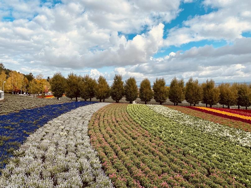 「ファーム富田」の花畑