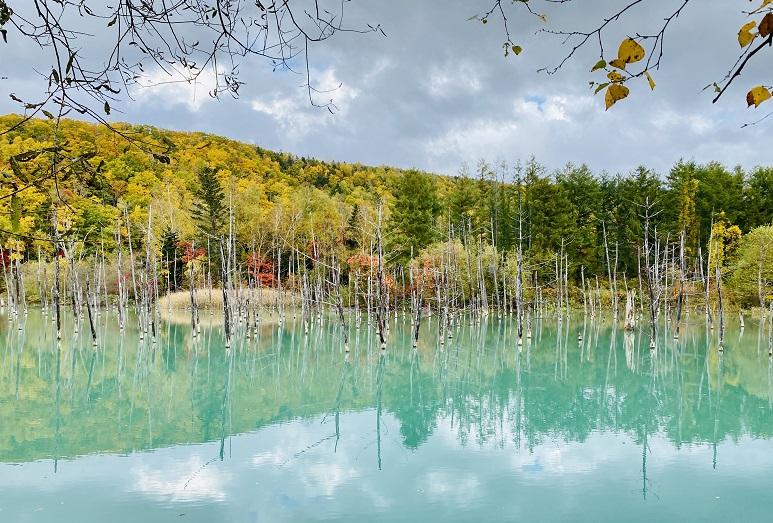 美瑛の「青い池」