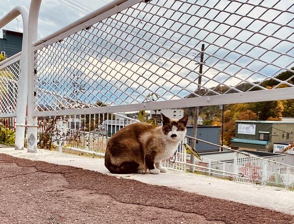 夕張の廃墟通りで佇む猫