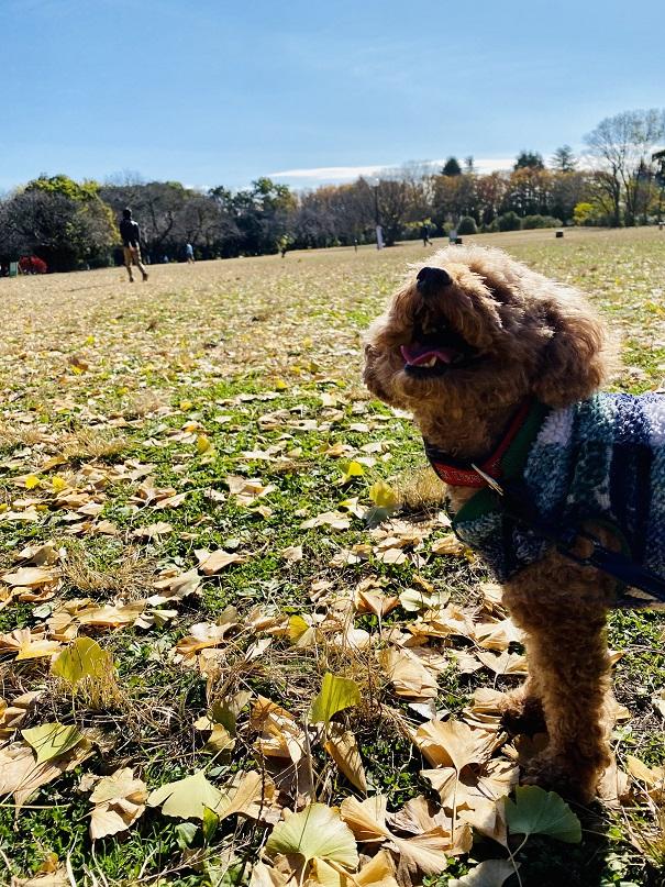 公園の銀杏の葉でハイになるジェシー