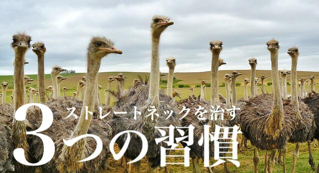 f:id:dokodemobakaaruki:20170826125116j:plain