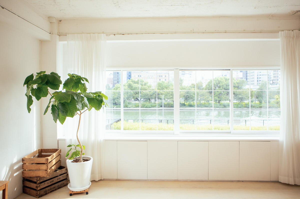 f:id:dokudamiyoshiko:20210602094616j:plain