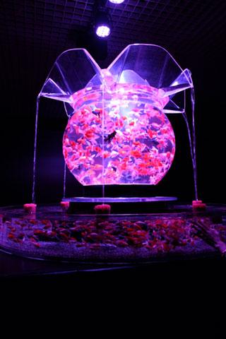 アートアクアリウム花魁