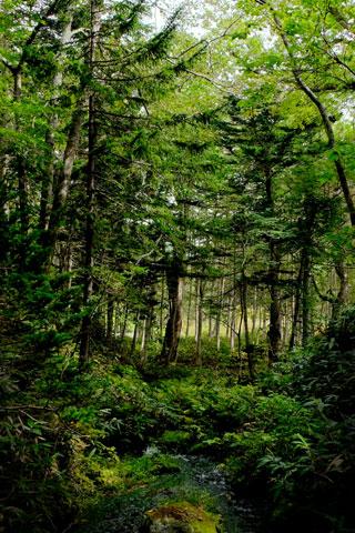 熊越の滝へ向かう森の中