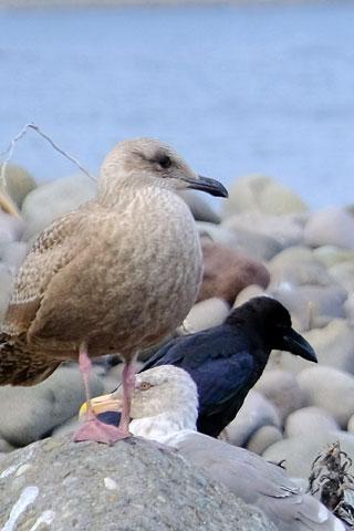 海に集う鳥たち