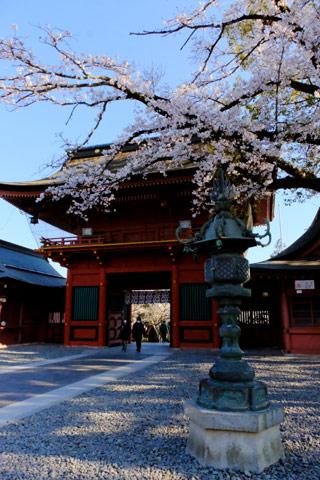 内側から見た桜門