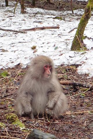 帰り道のお猿さん