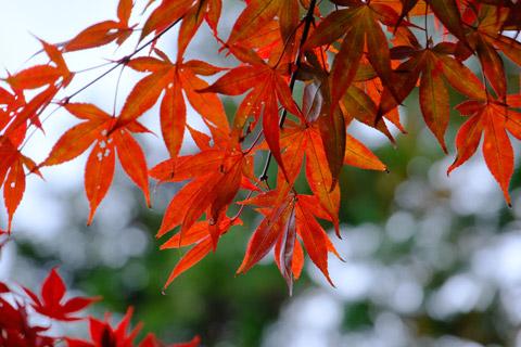 多良峡森林公園の紅葉
